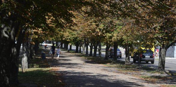 На бульварі Шевченка пожовкли каштани (ВІДЕО)