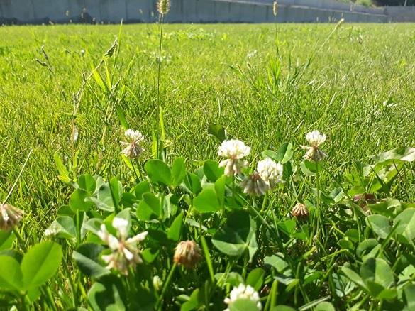 На футбольному полі черкаського стадіону за 4,5 мільйонів розцвіли квіти (фотофакт)