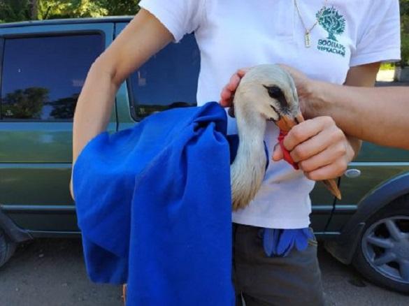 Лелеці, якого врятували черкащани, знайшли нову домівку (ФОТО)