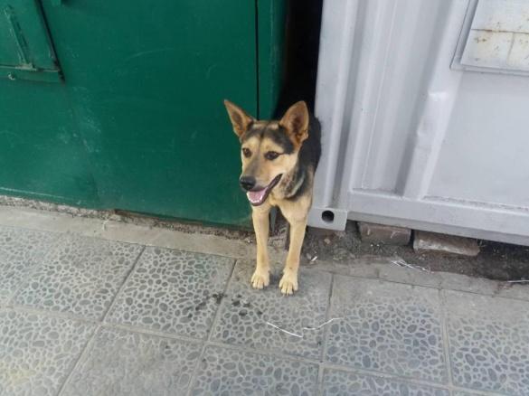 Золотоніські надзвичайники врятували собаку з металевої пастки (ВІДЕО)