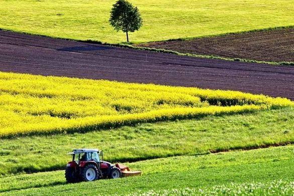 На Черкащині орендаря змусили повернути державі землю, вартістю більше трьох мільйонів гривень