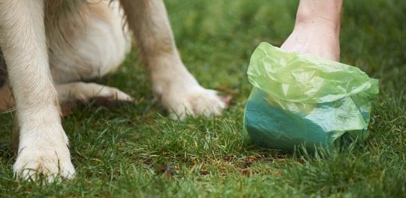 Черкасці просять мерію зобов'язати власників тварин прибирати за своїми домашніми улюбленцями