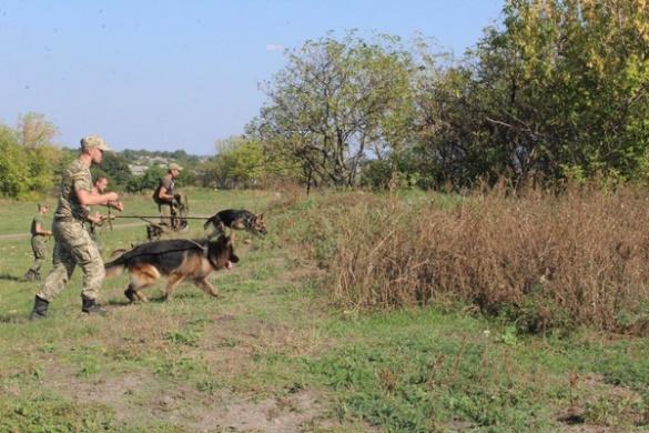 Дівчину, яка зникла місяць тому на Кіровоградщині, допомагають шукати черкаські кінологи (ФОТО)