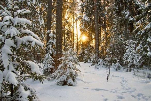 Синоптики прогнозують у Черкаській області найтеплішу зиму за 30 років