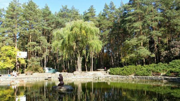 У черкаський парках замість трухлявих дерев посадять нові