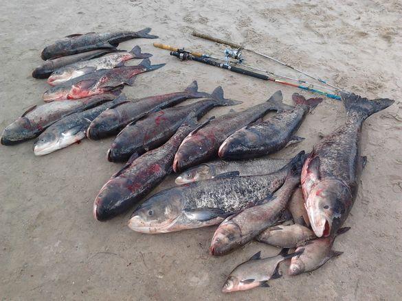 На черкаських водоймах браконьєри за тиждень наловили на майже 50 тисяч гривень