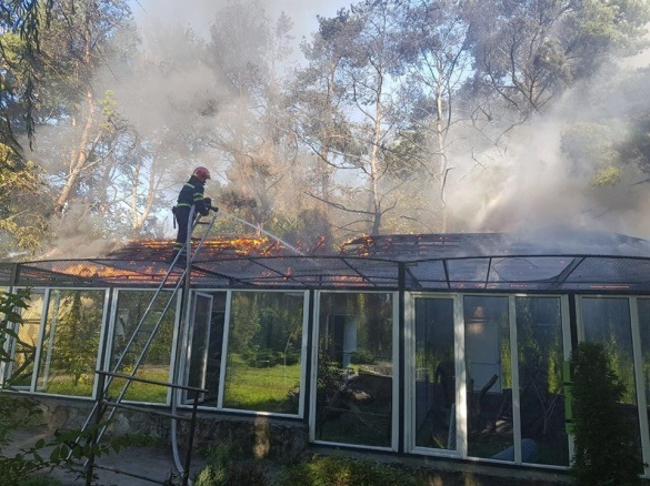 У черкаському зоопарку розповіли про стан врятованих із пожежі птахів (ФОТО)