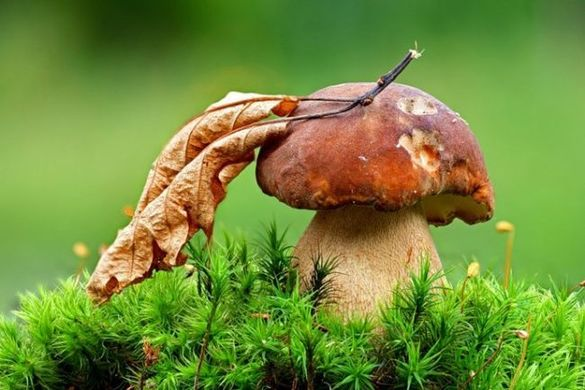 На Черкащині зафіксували нові випадки отруєння грибами