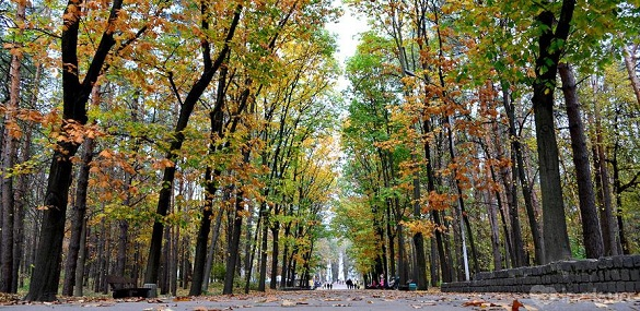ТОП-5 атмосферних місць у Черкасах для осінніх прогулянок