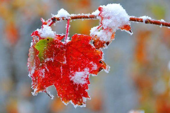 Час одягатися тепліше: на Черкащину насуваються дощі з мокрим снігом
