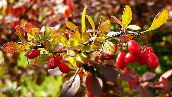 Черкаські парки прикрасили вічнозеленими та квітучими насадженнями (ФОТО)