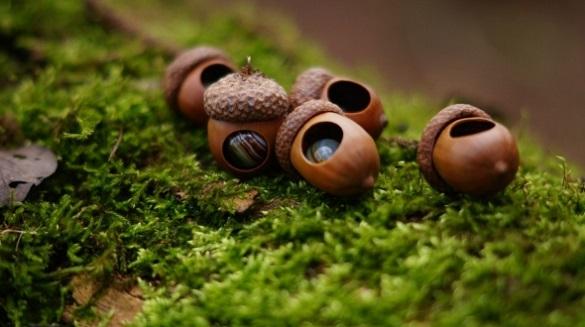 На Черкащині планують висадити понад 70 тонн лісового насіння