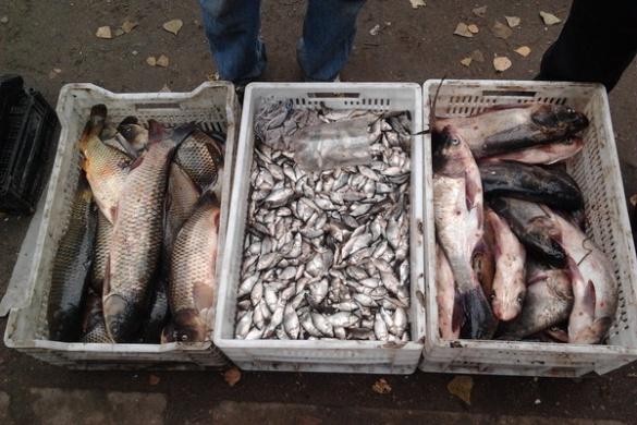 Правоохоронці викрили черкащан на незаконному продажі риби (ФОТО)