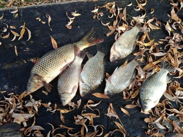 Черкаські браконьєри за місяць виловили понад дві тонни риби
