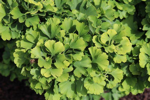 Черкаський парк озеленили різновидами декоративних рослин