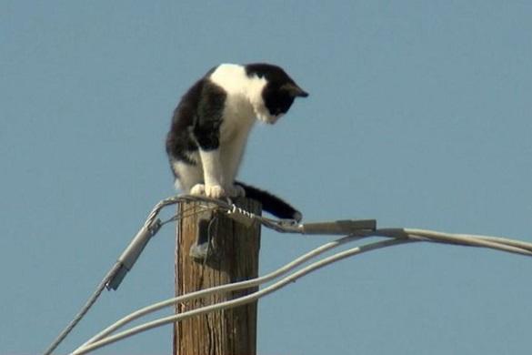 Рятувальна операція: у Черкасах визволяли чергового кота