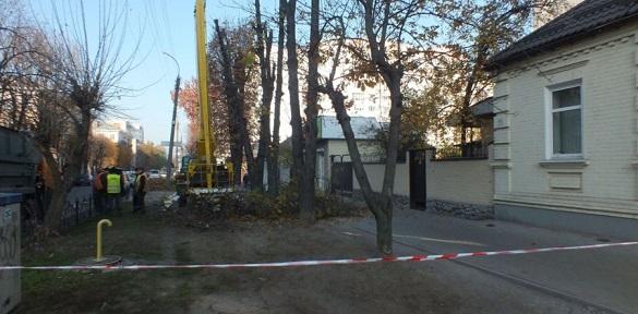 У середмісті Черкас кронують дерева