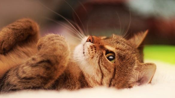 Безпритульні красені: як у Черкасах рятують котів