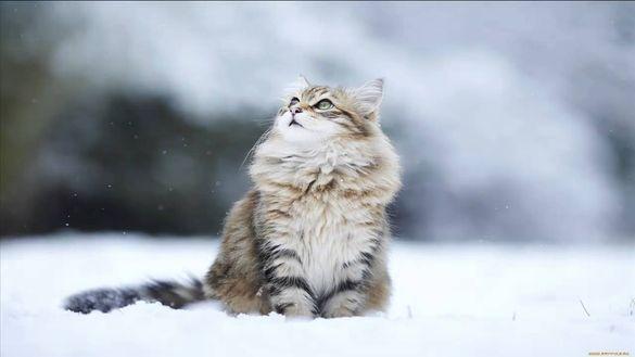Черкаську область починає засипати перший сніг