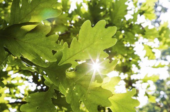 Навесні черкасців радуватиме озеленений парк
