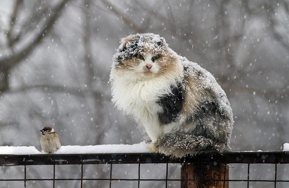 Як у середині січня: на Черкащині очікуються морози й сильний снігопад