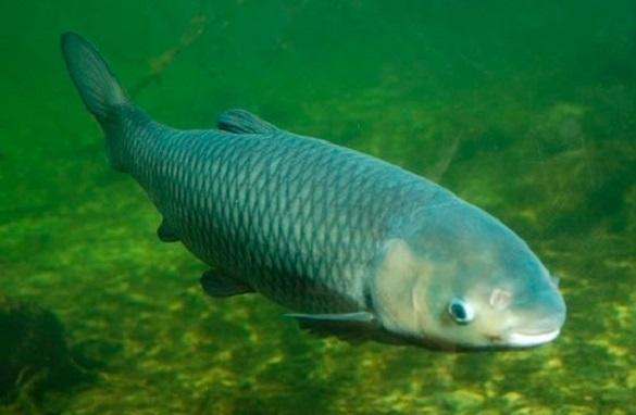 Черкащина увійшла в п'ятірку лідерів із вирощування риби