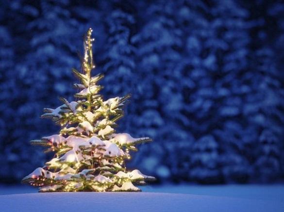 Новорічна казка: за скільки черкащани зможуть придбати ялинки у лісівників
