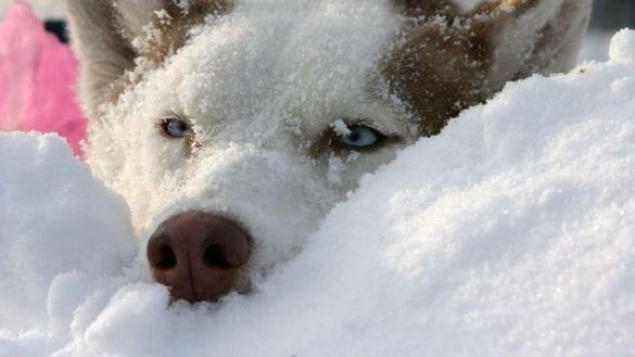 Комунальники просять черкасців рятувати безпритульних тварин взимку