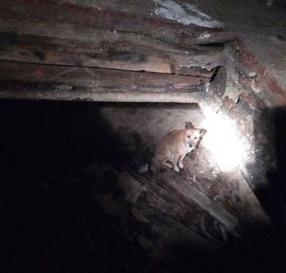 На Черкащині чотирилапий потрапив до холодної