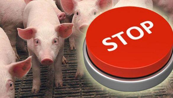 В Кам'янці приховують чуму свиней?