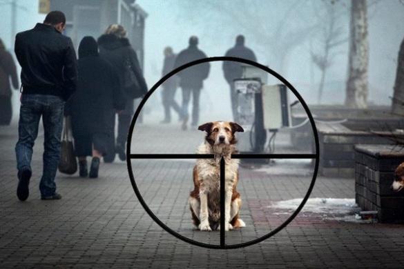 На Черкащині чоловік вийшов з автівки з рушницею і застрелив собаку, що була поруч із господарем