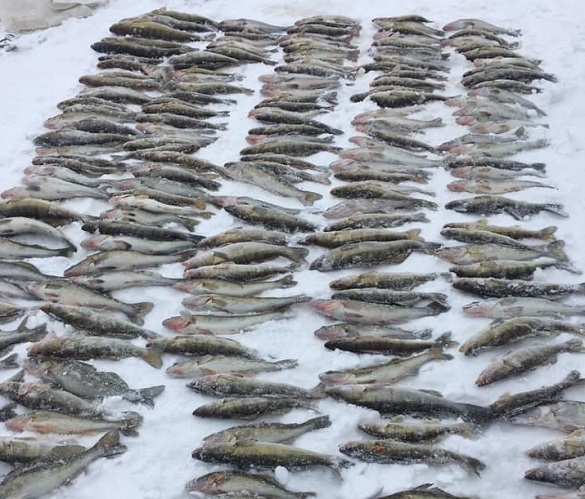 Стало відомо, куди дівається риба, яку черкаський патруль вилучає в браконьєрів