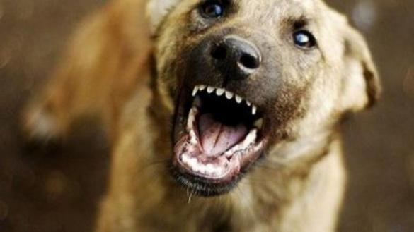 У Черкасах серед вулиці дітей покусав собака