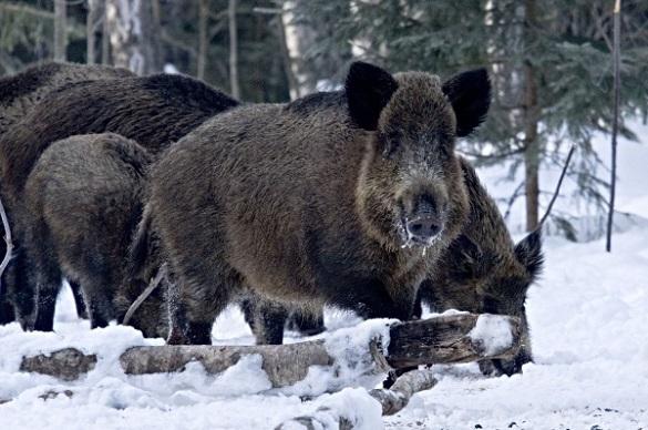 На Черкащині почали рахувати диких тварин