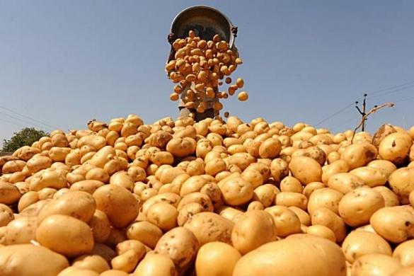 Через погодні умови на Черкащині зросли ціни на картоплю