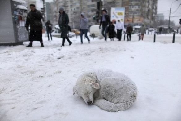 Волонтери  Черкащини просять не проганяти безпритульних тварин, які шукають прихистку від снігу