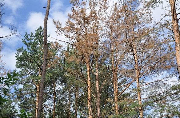 Відтепер, перш ніж зрізати аварійні дерева в Черкасах, їх показуватимуть міській владі