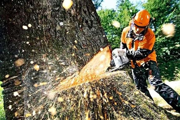 У Черкасах кожен охочий зможе долучитися до обстежень дерев, які збираються зрізати