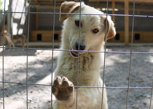 Маленькі черкасці просять побудувати притулок для тварин-безхатьків