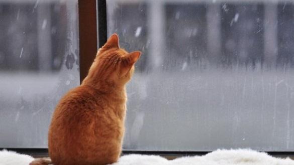 Якої погоди варто очікувати черкащанам у найближчі дні