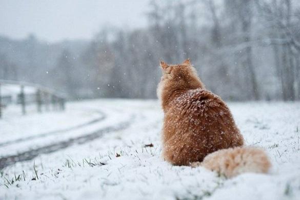 Не поспішайте ховати зимовий одяг: на Черкащину повернуться морози