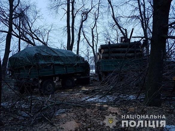 У Черкаській області виявили незаконну порубку лісу (ФОТО)