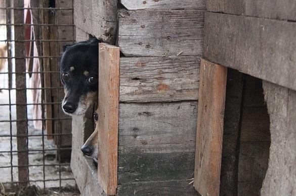 Черкащан закликають не здавати тварин до притулку