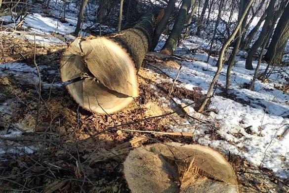 На Черкащині затримали чорних лісорубів, які вирубали дерев на понад мільйон гривень (ФОТО)