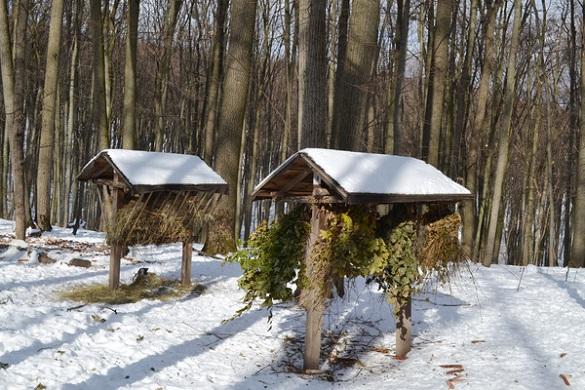 Лісівники Черкащини підгодовують диких тварин