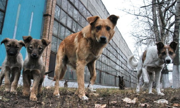Черкащан штрафуватимуть за неналежний догляд за тваринами