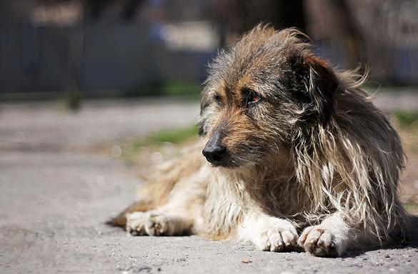 У Ватутіному від рук невідомих загинули більше 20 собак