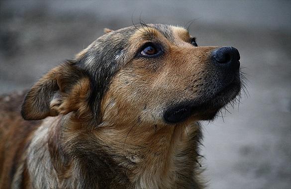 З'явилися нові подробиці масового вбивства собак у Ватутіному (ВІДЕО)