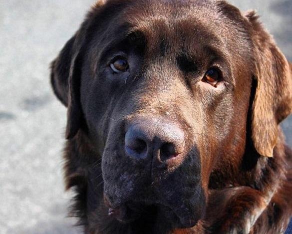 Черкащанка шукає пса-втікача (ФОТО)