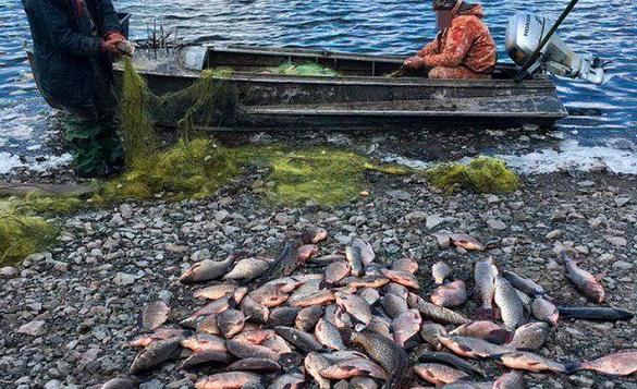 На Черкащині браконьєри наловили риби на понад 100 тисяч гривень (ФОТО)
